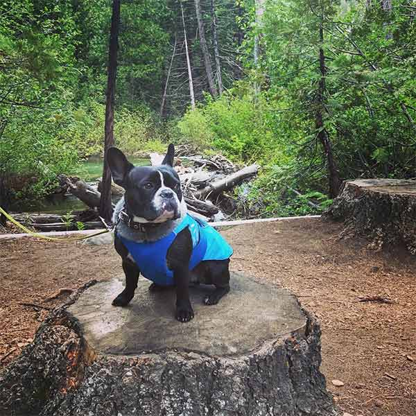 Dexter hiking Horsetail Falls. Photo Credit: @lmcarbonell