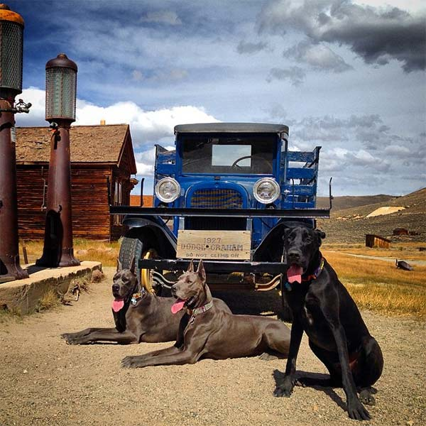 Bodie, Gauge and Justice at Bodie State Historic Park. <br/>Photo Credit: @justice818