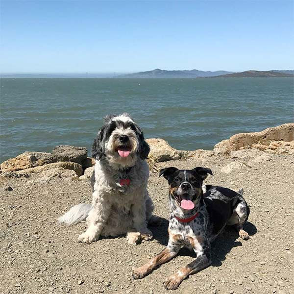 Happy dogs at Point Isabel. Photo Credit: @theemmanation