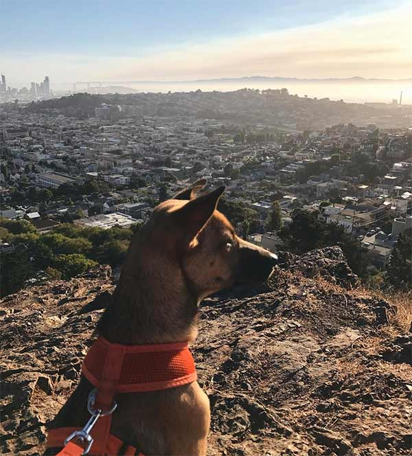 View from Bernal Heights Park. Photo Credit: @thea_l8r