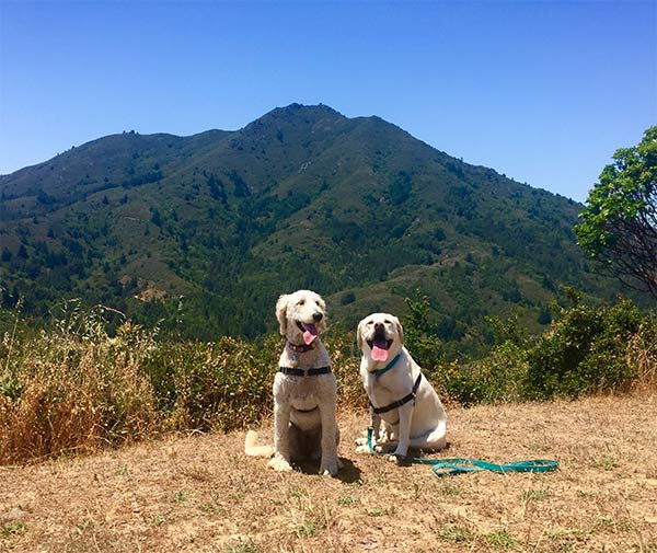 Maya and Loretta hike Mt. Tam <br/> Photo Credit: Dave Kendrick