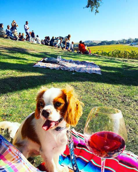 Bernie enjoys a picnic with family. Photo Credit: @lord_bernard_