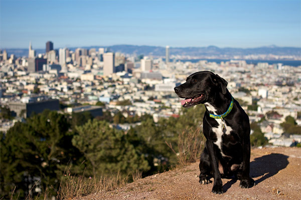 Corona Heights. Photo Credit: jefffielding (CC)