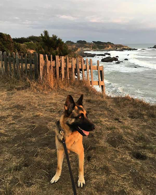 Lucky loves the Sonoma Coast. Photo Credit: @harper_and_lucky