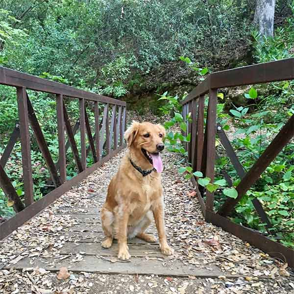 Nala celebrating her birthday on the trail - Shasta Dam <br/> Photo Credit: larryvaupel