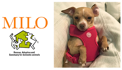 Vote for Milo in the Healthy Paws Rescue Race!