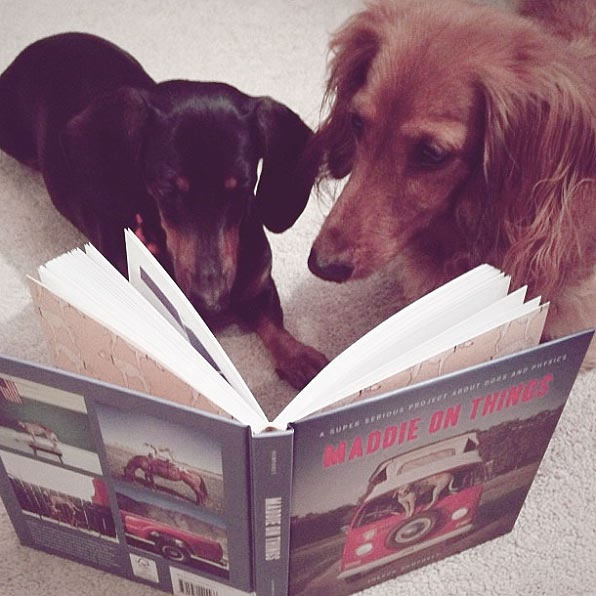 Support canine literacy... Photo Credit: @jesmcdowell