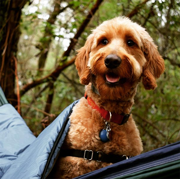 Napa Valley Camping With Your Dog!