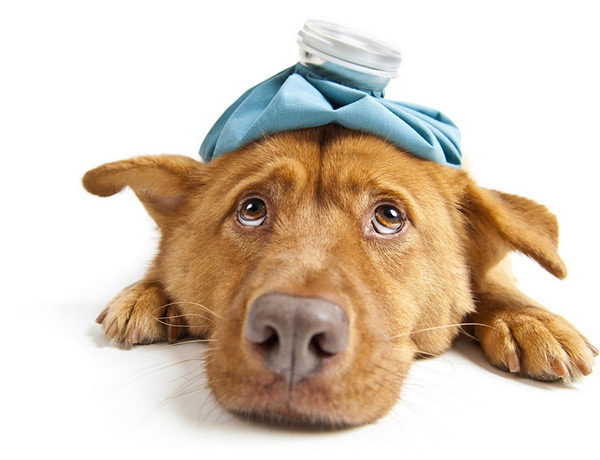 Yes, Your Dog Can Catch the Flu Too.