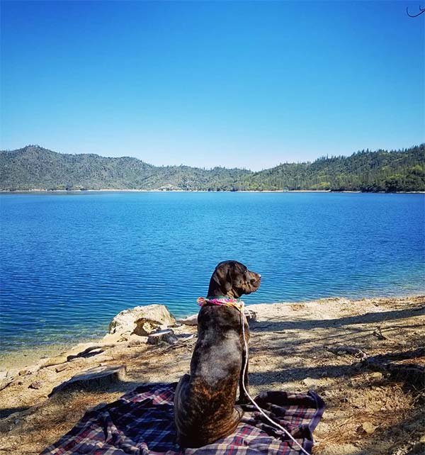 Whiskeytown National Recreation Area <br/> Photo Credit: @bodhi_mastiff