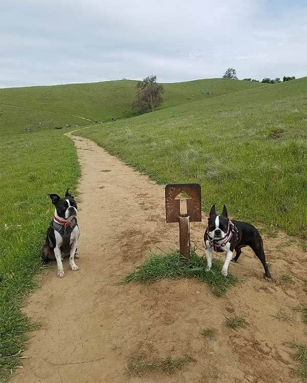 Sunol Regional Wilderness <br/> Photo Credit: @chico_the_boston_terrier