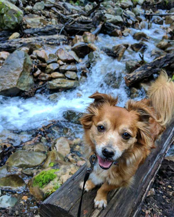 Chasing waterfalls at  Uvas Canyon County Park <br/> Photo Credit: @adventuresofbearstorch