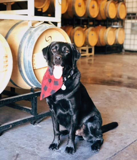 Dog Friendly Wineries Livermore