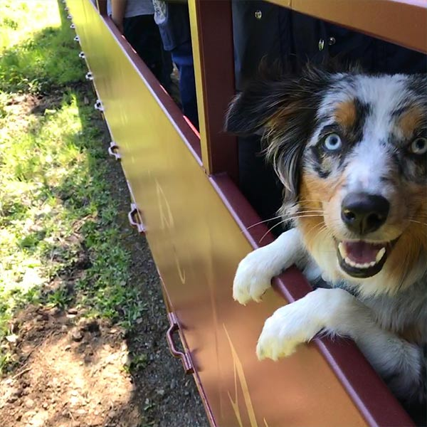 Wednesday rides the Skunk Train, Fort Bragg <br/> Photo Credit: @wandering_wednesday
