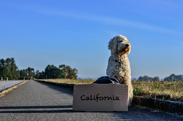 What to Do If Your Dog Runs Off While Traveling