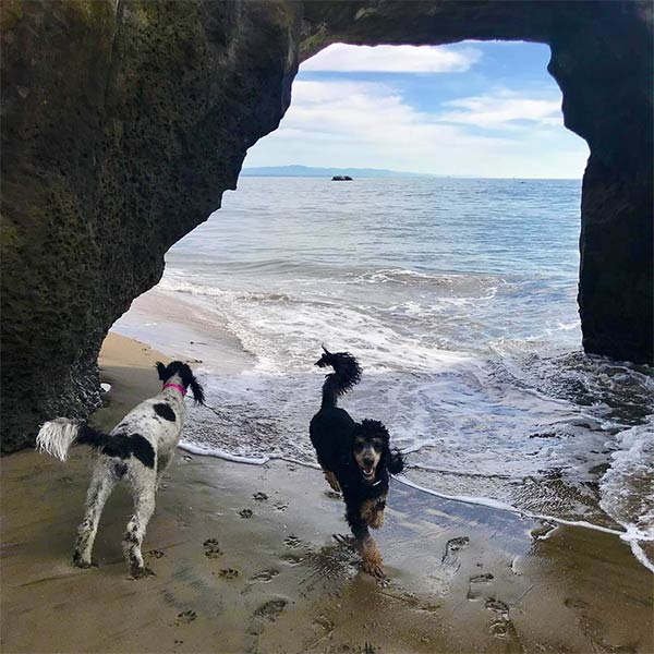 We found a cave! Photo Credit: @phantompoodleparti