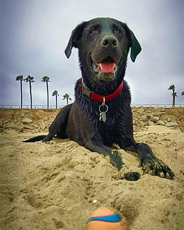 Riley at Huntington Dog Beach - Photo Credit: @timphoto5