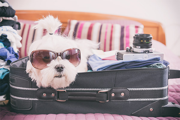 A Dog Lover's Packing List