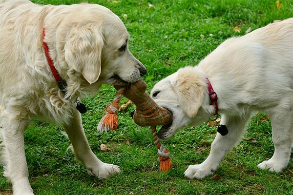 The Importance of Play for Your Dog