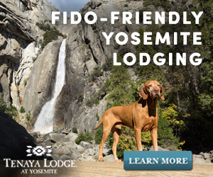 Yosemite is Open—Tenaya Welcomes You Back!