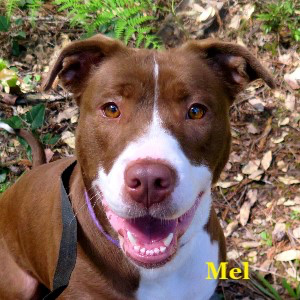 Photo: Mel - Mendocino Coast Humane Society