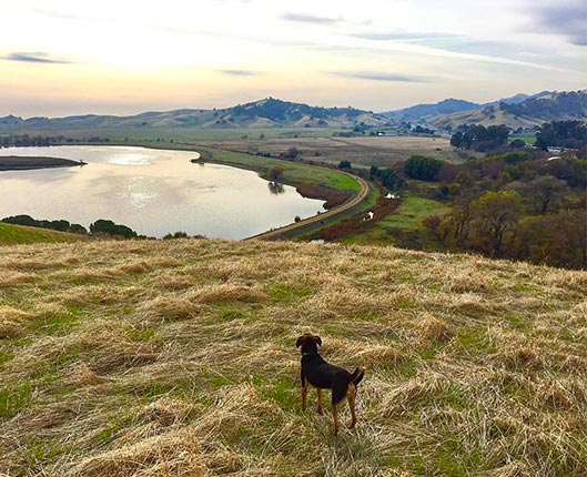 Lagoon Valley/Peña Adobe Regional Park <br/> Photo Credit: @itskalinotcali