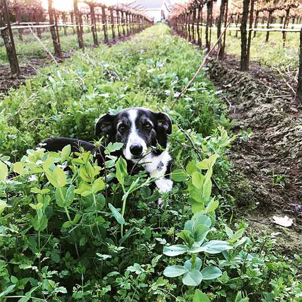 Vineyard Supervisor at Popie Wines <br/> Photo Credit: @popiewines