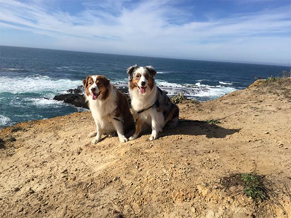 December 2017 Mendocino DogCation Winners - Photo Credit: Kathy Murphy