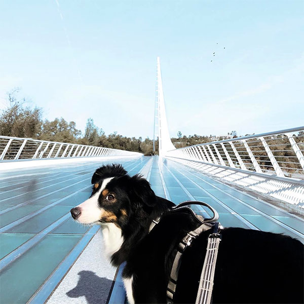 Sundial Bridge at Turtle Bay <br/> Photo Credit: @heartbreaker_fluff