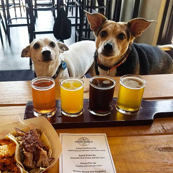 Jackrabbit Brewing Company - Photo credit: @brewswithbuster