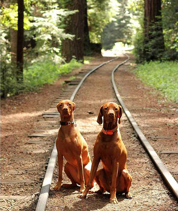 Roaring Camp Railroads - Photo Credit: zak_the_vizsla