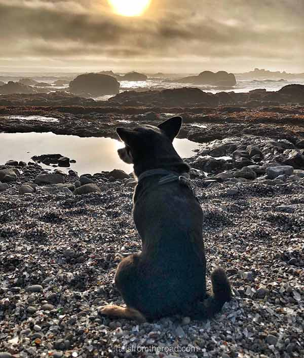 Glass Beach - Photo Credit: @take.your.dog.along