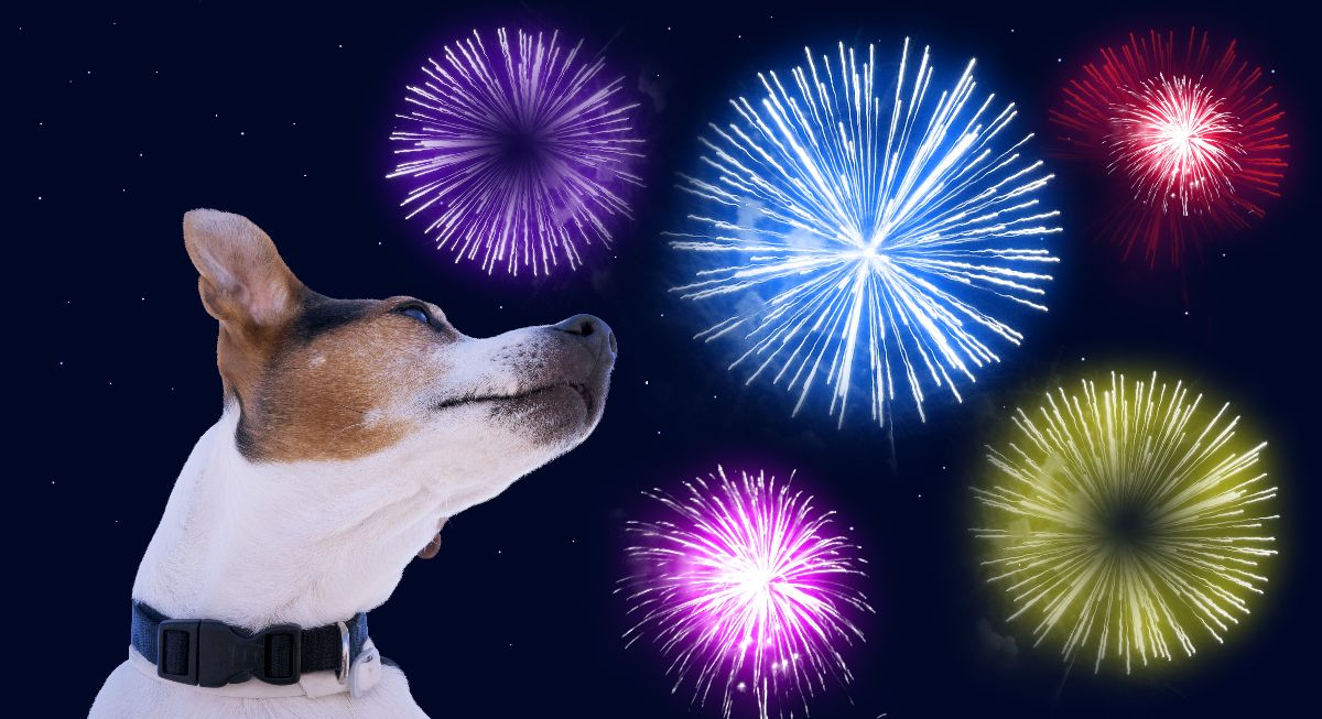 Vet Buzz: Fireworks Anxiety