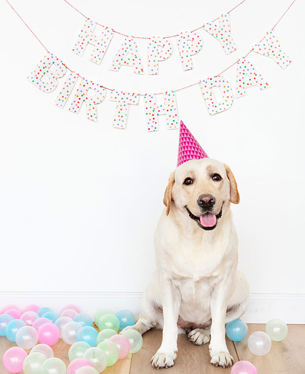 Happy Birthday! - Photo Credit: rawpixel.com