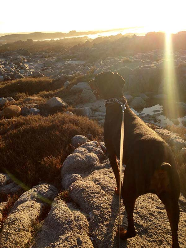 Queen of Asilomar Beach - Photo Credit: Tandra Wright
