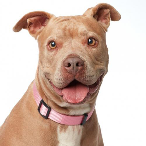 Olivia - Photo Credit: No Kill Los Angeles