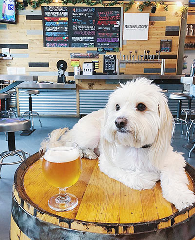 Coachella Valley Brewing Co. / Photo: @djangotheterrier
