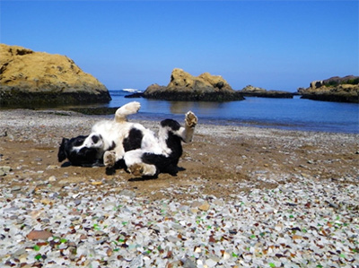 Daisy Spaniel at Glass Beach / Photo: Radvan Adventures