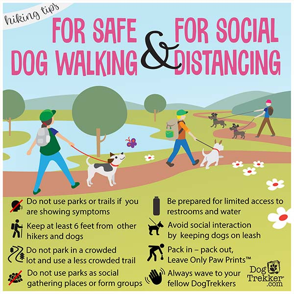 Bending the Curve: Tips for Safe Dog-Walking