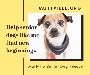 Muttville Set to Rescue Their 8,000th Dog!