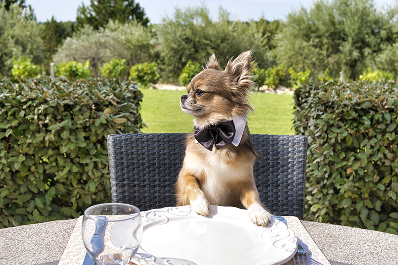 Outdoor Dining With Your Pup