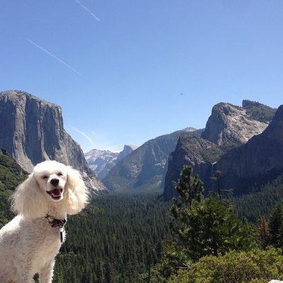 Cordelia checks out Tunnel View, Photo by @cordelias_adventures