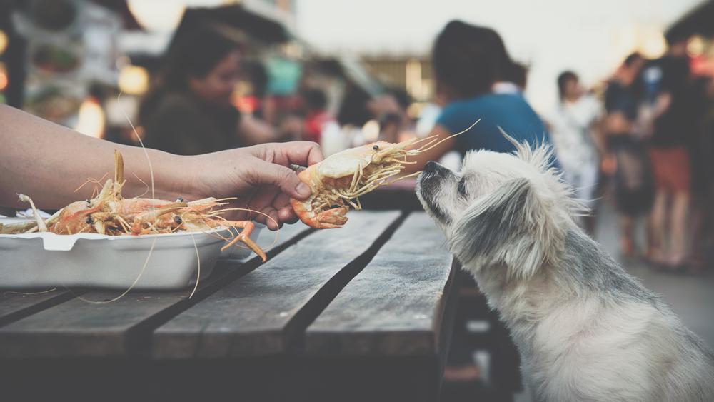 Linger Longer at a Patio Table With Your Pup
