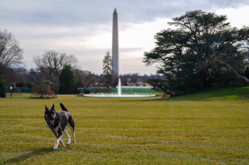 Major on the White House lawn in January 2021
