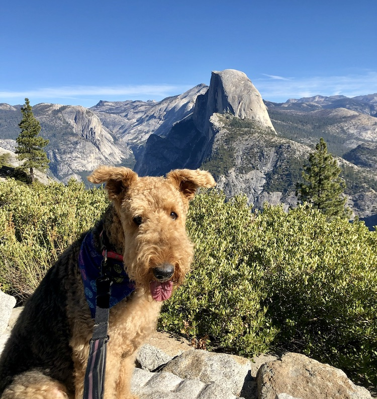Taya overlooking Half Dome, courtesy Cynthia Carillo