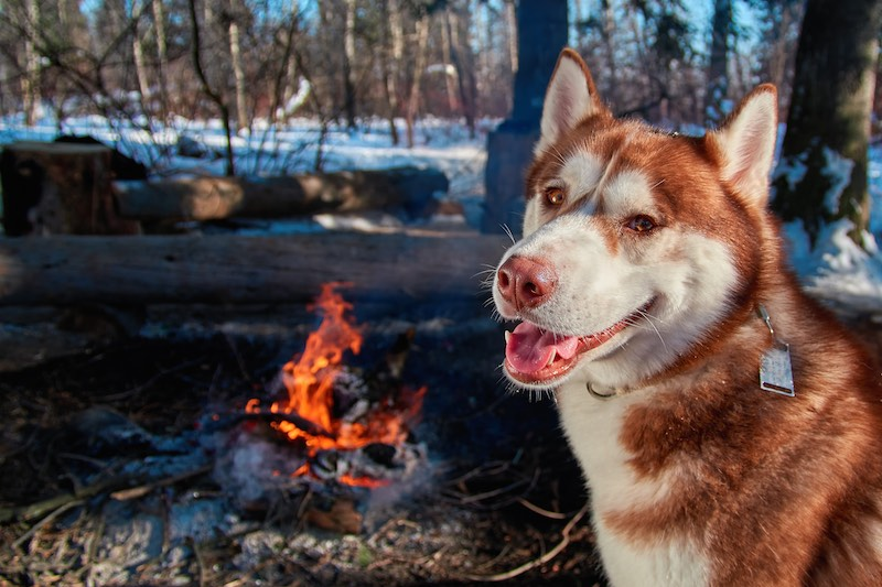 Dog-friendly Hotels, Camping & More