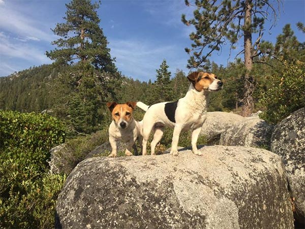 Tessa & Jax hike Tahoe. Photo Credit: Julie Wetzel