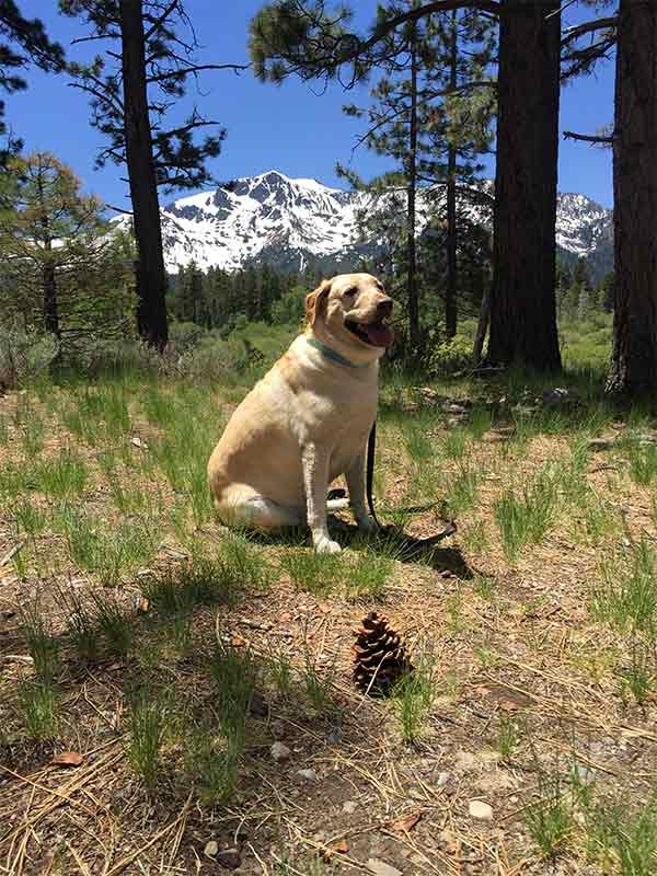 Teddy at Taylor Creek in South Lake Tahoe <br/>Photo Credit: Susan Bracamontes