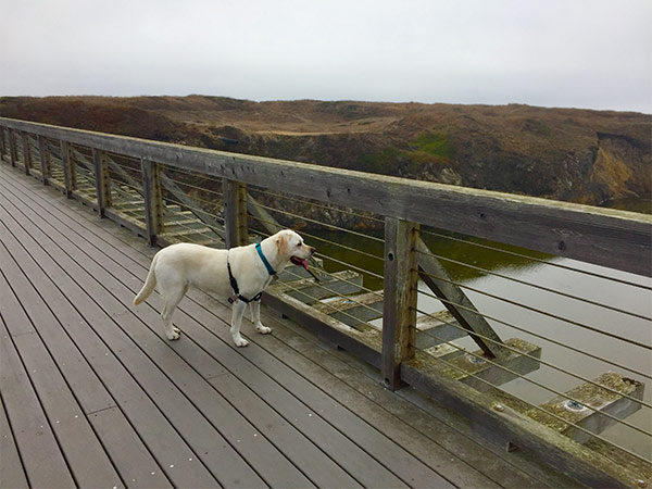 Maya exploring Fort Bragg <br/> Photo Credit: Dave Kendrick