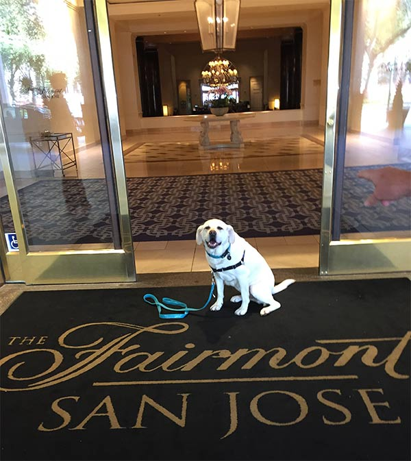 Maya at Fairmont San Jose